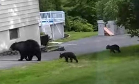 bears in New Jersey.jpg